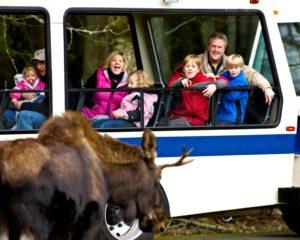 Wildlife and tourists at Northwest Trek
