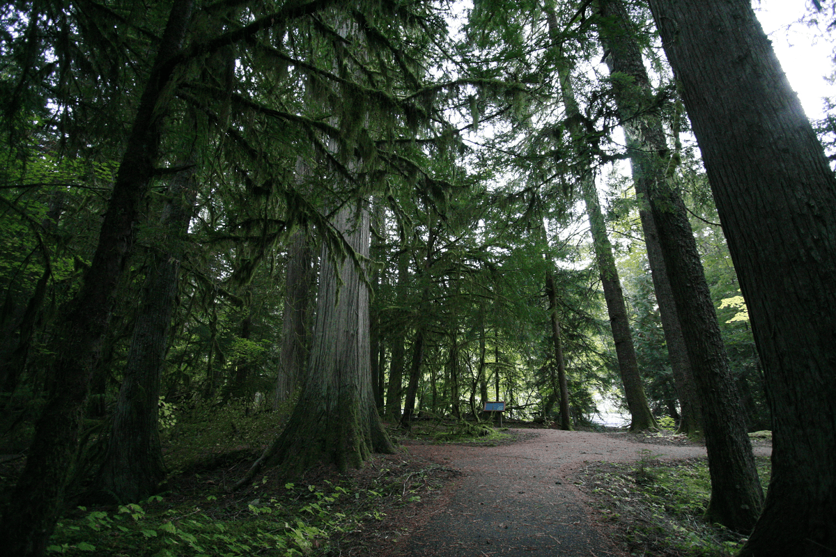 Federation Forest State Park