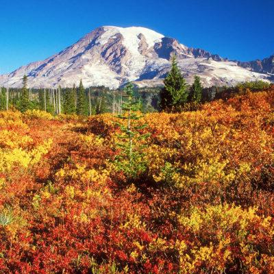 Mt. Rainier above fall colors along the Snow Lake Trail in Mount Rainier National Park, Washington, USA.