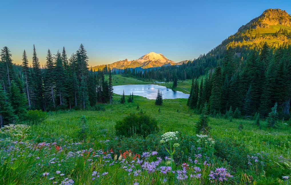 Wildflowers, mountains, and a lake.