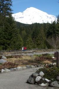 Pathways near the Longmire Museum