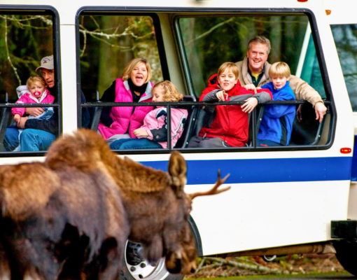 A family in the tour vehicle at Northwest Trek Wildlife Park