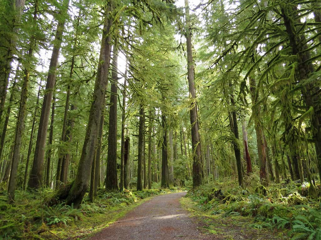 Visit The Temperate Rainforest At Carbon River