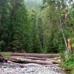 Huckleberry Creek