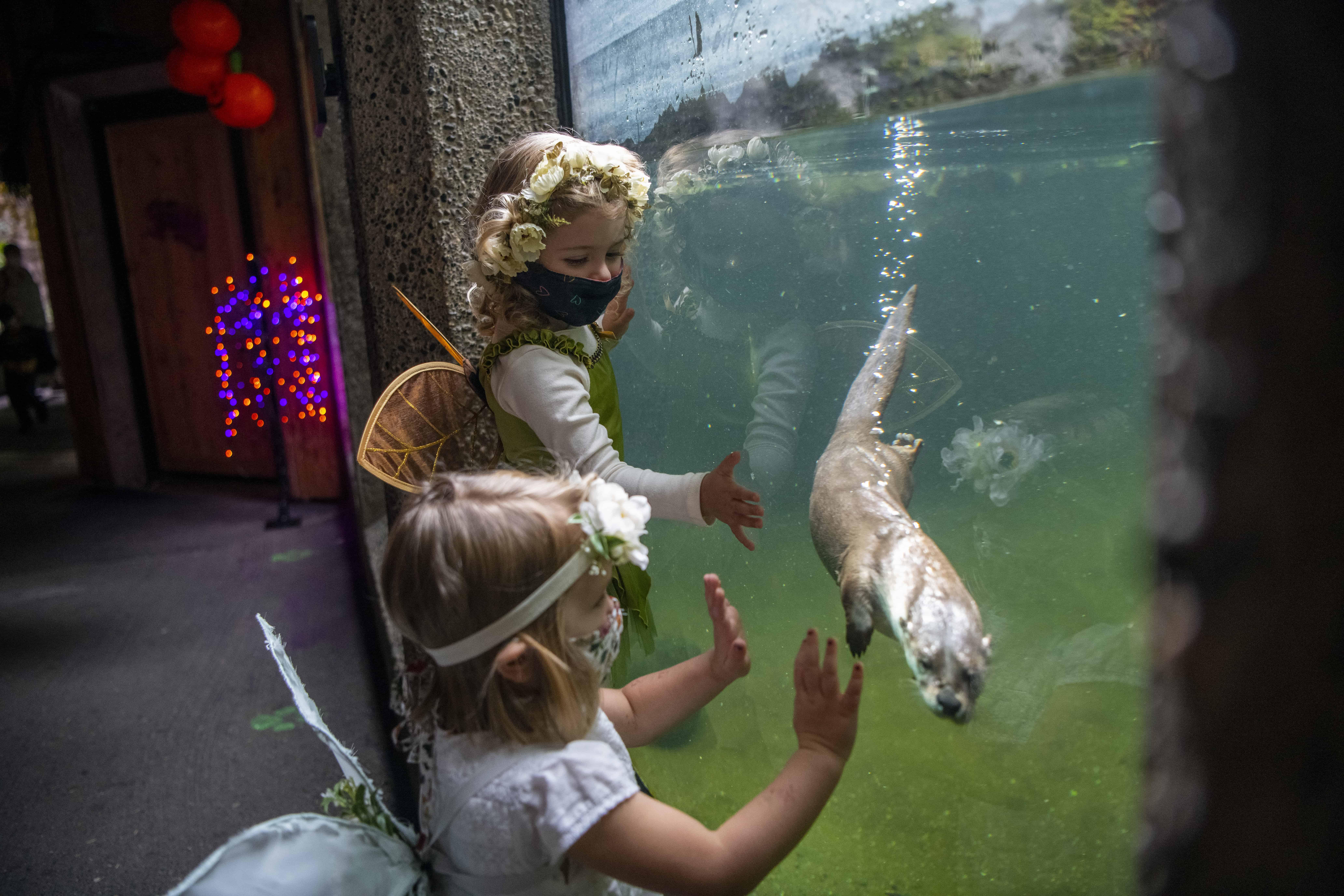 Two children look at otters at Northwest Trek Wildlife Park