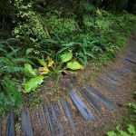 Rainforest Nature Loop Trail