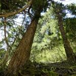 Palisades Trail (Hwy 410)