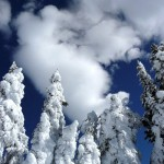 View of snow covered trees and sky