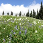 prolific wildflowers at Indian Henry's Hunting Ground