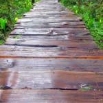 Rainforest Nature Loop Trail