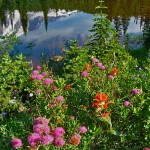 Wildflowers at Reflection Lakes at Mount Rainier