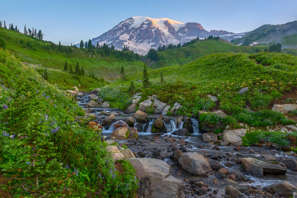 Wildflowers, Mt Rainier, and a creek