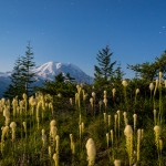 Plants with Mt Rainier in the background