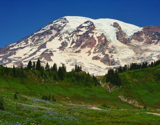 Mt. Rainier and Alpine Meadow