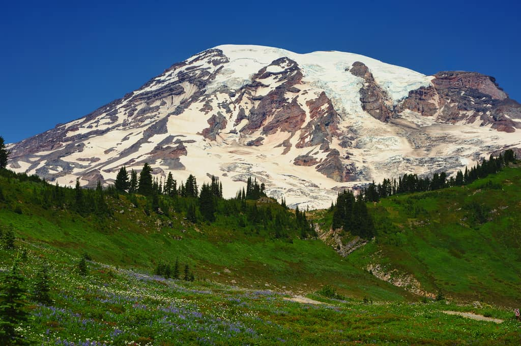 Mt. Rainier and Alpine Meadow