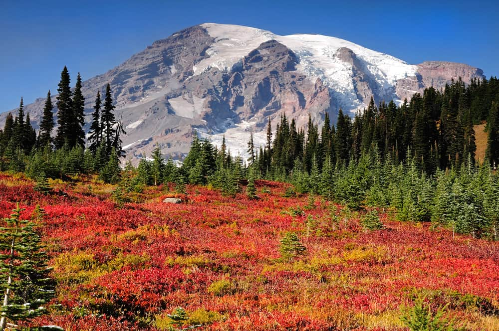 Mount Rainier Rainier Fall Color