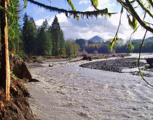 Nisqually River Fishing