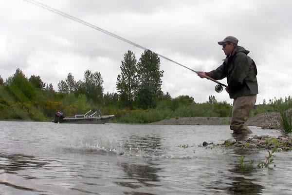 Cowlitz river fishing visit rainier for Cowlitz river fishing
