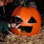 Pumpkin Chomp & Stomp