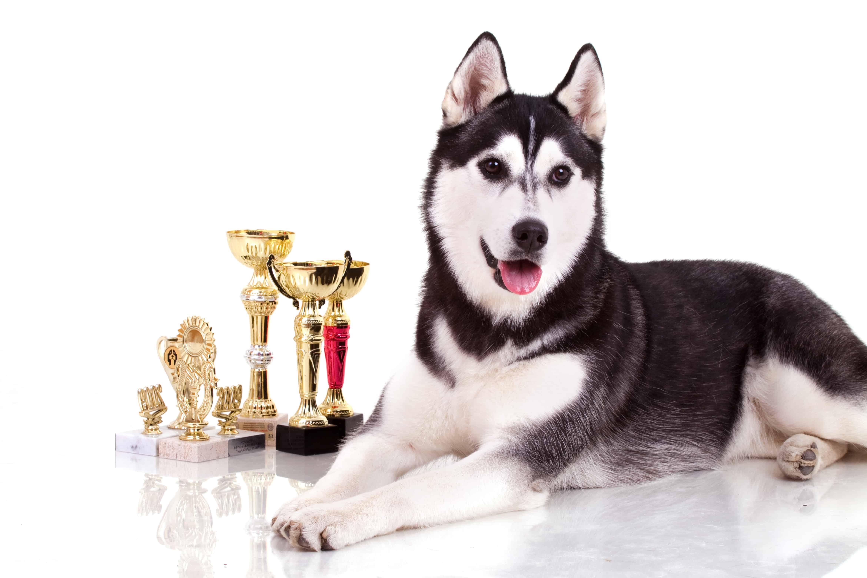 Enumclaw International Dog Show