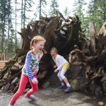 Kids playing at Kids Trek at Northwest Trek Wildlife Park