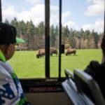 Wear your Seahawks gear at Northwest Trek Wildlife Park