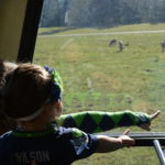 Wear your Seahawks gear and save at Northwest Trek Wildlife Park during Blue Fridays this football season.