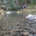 Scenery at Little Naches Campground