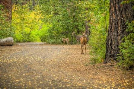 Wildlife at Cottonwood Campground