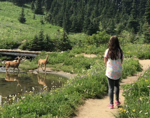 Girl Sharing the Wildflower Trail with Deer at Tipsoo Lake