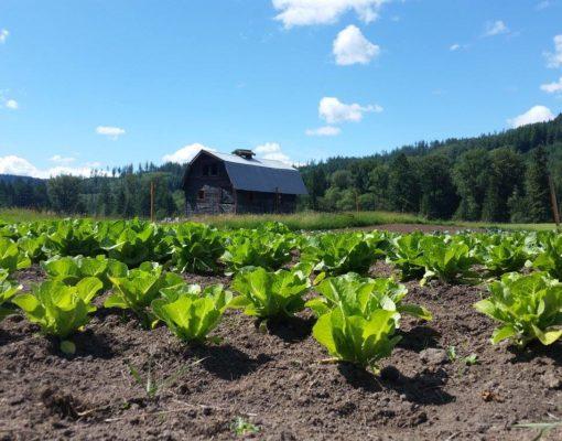 Frey Family Farm