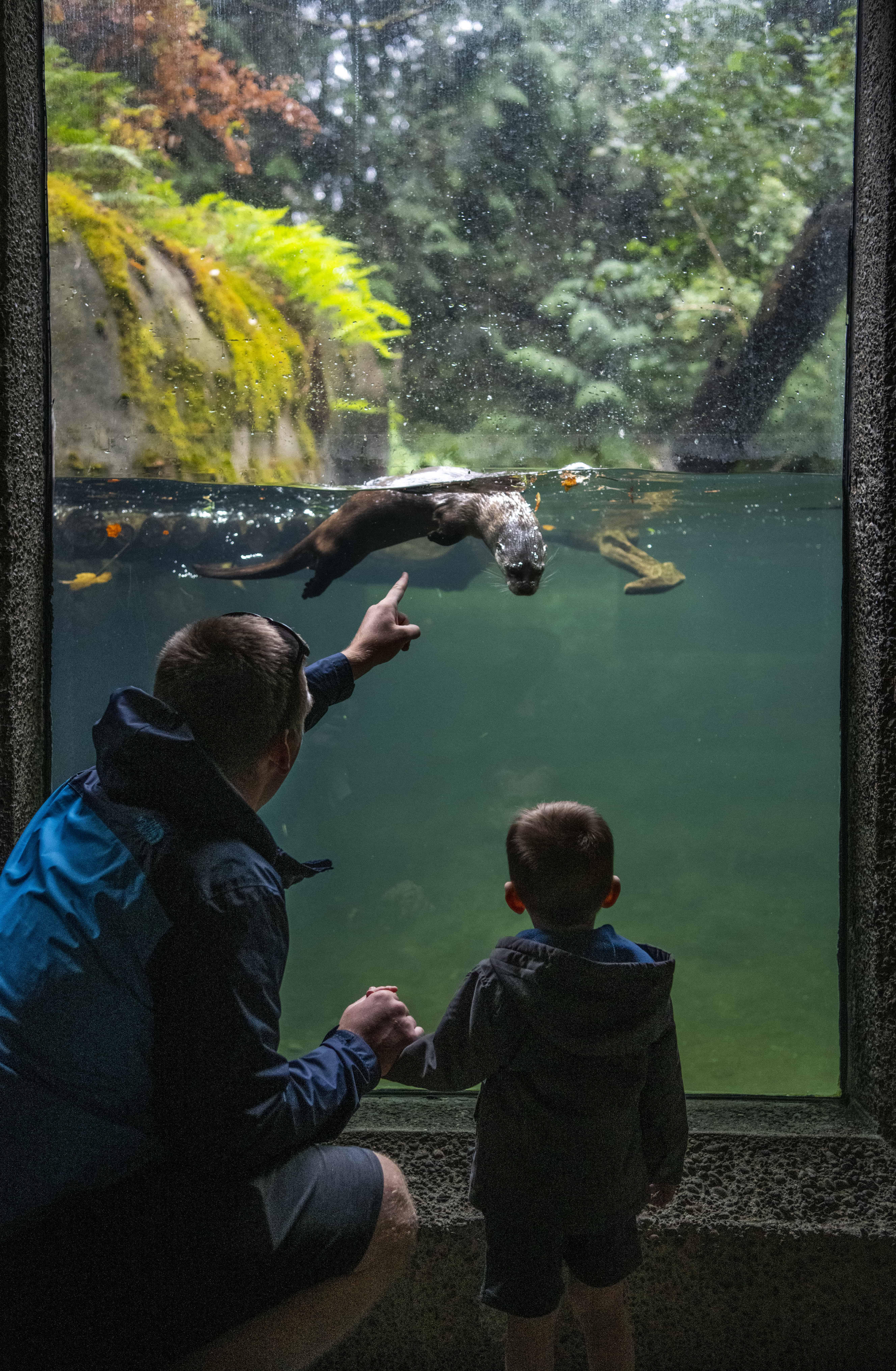 Father and son watch an otter swim at Northwest Trek Wildlife Park