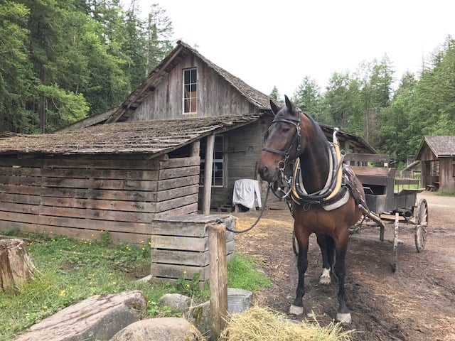 Outdoor Activities Now Available At Pioneer Farm Museum And Ohop Indian Village Visit Rainier