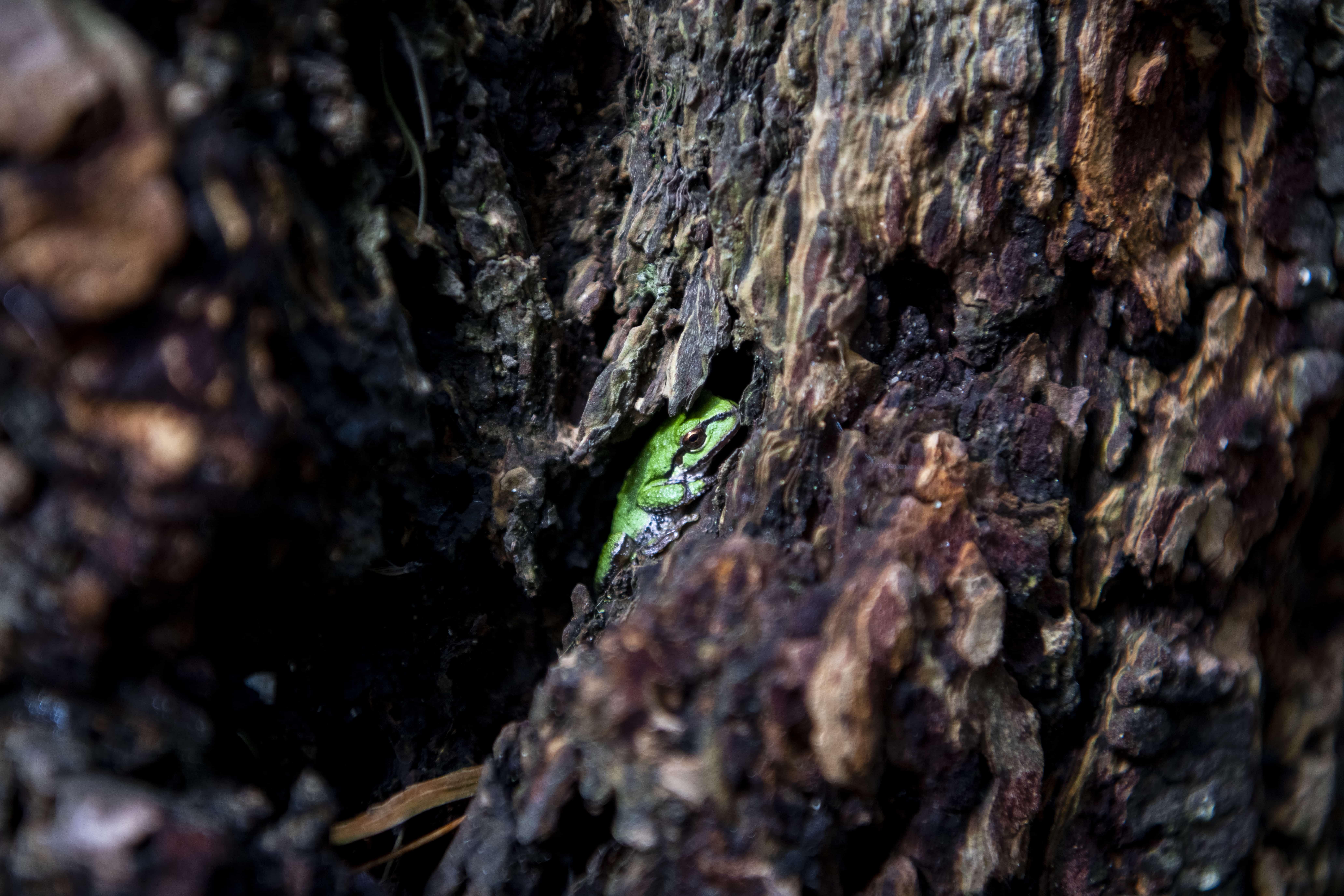 Green frog on a tree at Northwest Trek Wildlife Park