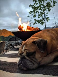 Dog sleeping by the fire