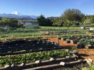 Rows of greens at Mason Jar Farm