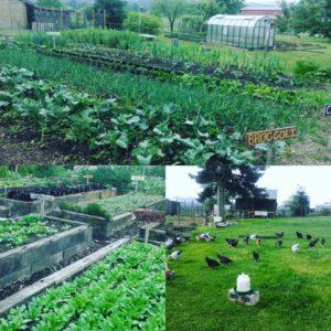 Mason Jar Farm collage