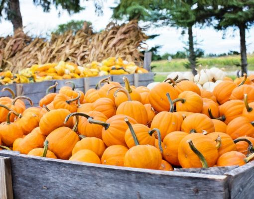 Photo of pumpkins image credit Jill Wellington
